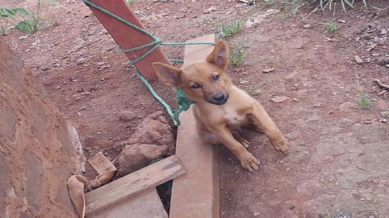 تعذيب كلب المطرية.. إحالة 4 متهمين للمحاكمة